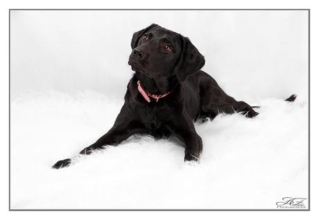 Senna Labrador kruizing