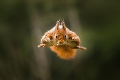 Jump Squirrel Jump !