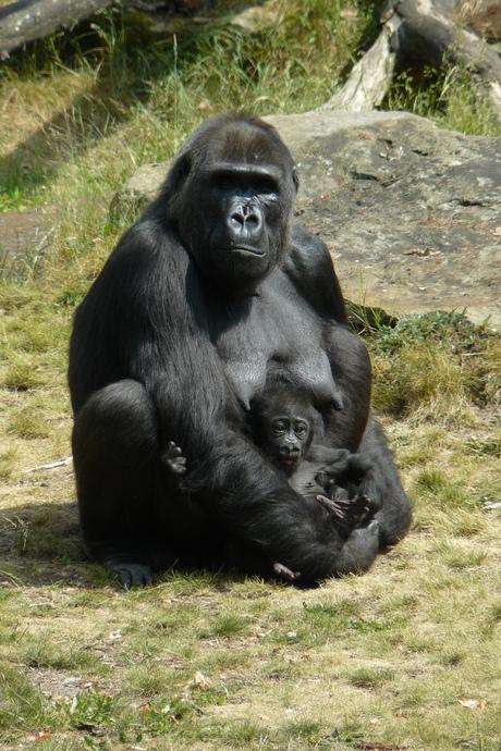 Klein bij mamma