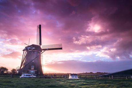 Roze molen