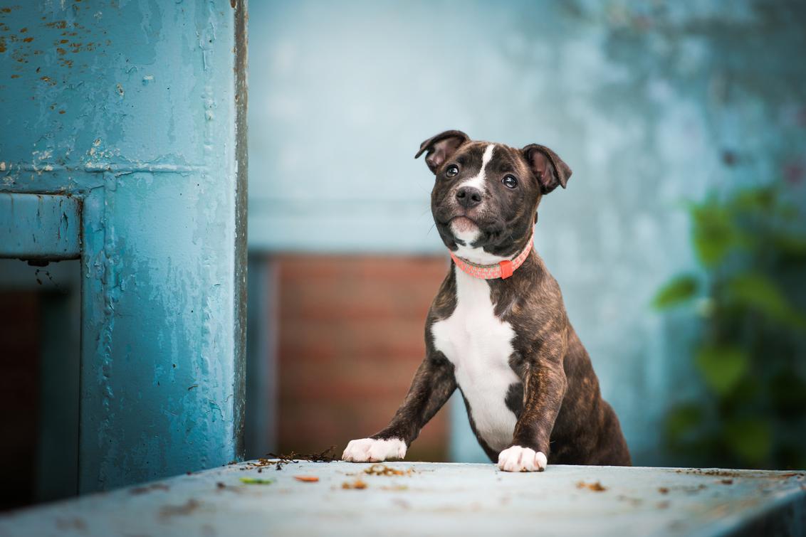 K8 - Lieve kleine Miss K8 - foto door HannahV op 21-05-2019 - deze foto bevat: portret, huisdier, hond, dier, puppy