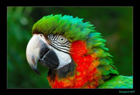 kleurenboog
