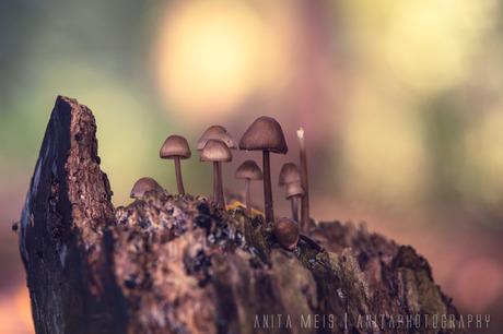 Groepje in het bos