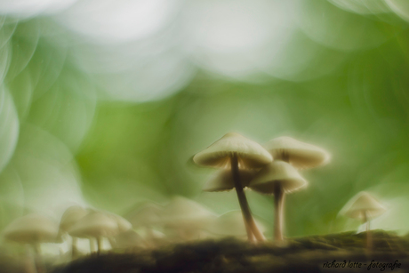 Fairytale forest 2