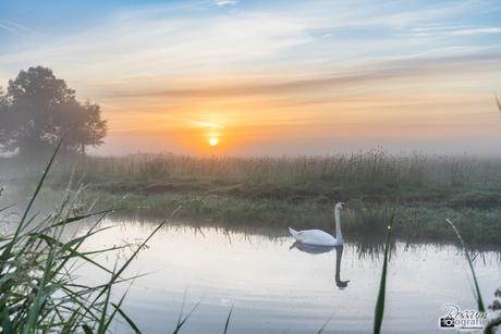 Zonsopkomst met Zwaan in de mist