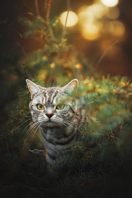 peeking through the bushes