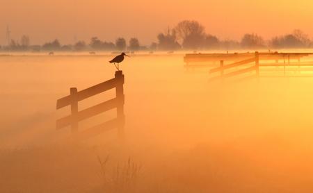 Grutto - een grutto op een hek op een mistige ochtend in de polder - foto door b.neeleman op 29-08-2015