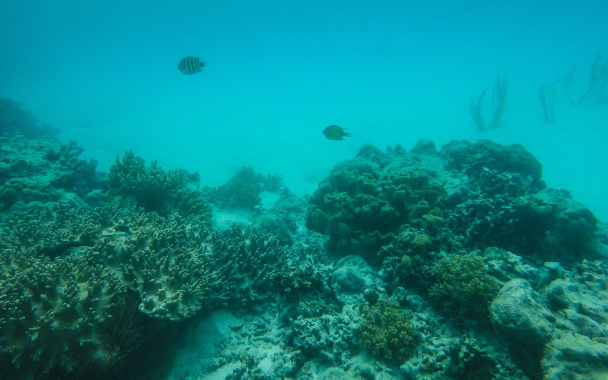 """Ceram - Vissies - Er zat ongeloofelijk veel vis in de prachtige heldere wateren van Seram, toch vind ik deze foto met maar 2 """"visjes"""" sprekender. - foto door Krulkoos op 03-11-2016 - deze foto bevat: onderwater, vissen, simpel, aqua, visje, indonesie, rustig, molukken, onderwatercamera, maluku, tx5, Seram, maurice weststrate, sony tx5, ceram - Deze foto mag gebruikt worden in een Zoom.nl publicatie"""