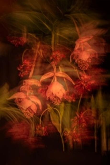 bloemen icm en dubbel