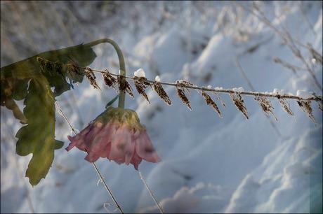 ook winternatuurkunst......