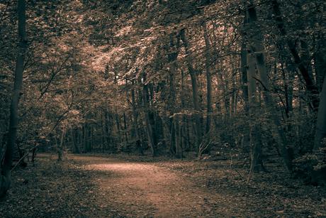 Verlicht bospad