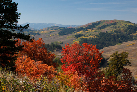 Fall Colors USA