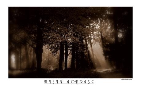 Misty Forrest..