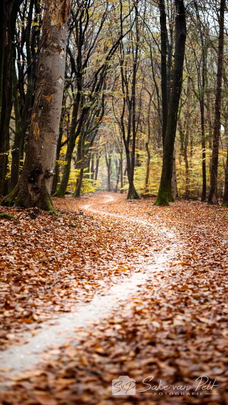 Slingerpaadje - Slingerpaadjes zijn altijd erg leuk, zeker om te fotograferen! Ze helpen de kijker door de foto heen. - foto door Sake-van-Pelt op 17-11-2020 - deze foto bevat: groen, lucht, wolken, zon, boom, natuur, bruin, geel, licht, herfst, bospad, blad, vakantie, landschap, mist, bos, pad, nederland, weg, beukenbos, blaadjes, speulderbos, seizoen, seizoenen, slingerweggetje, beuken, paadje, slingerweg, bospaadje, bladere