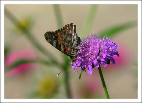 Vlindertuin Waalre