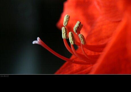 Bloom...lV