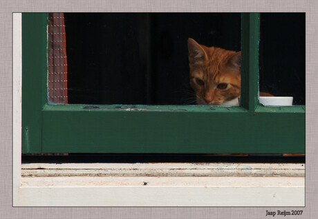 Kat ziet vlieg