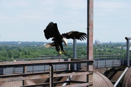 Landing - 6 hoog in een verlaten fabriek in Duitsland met roofvogels vliegen ^^ - foto door MarijeScheening op 17-08-2017 - deze foto bevat: natuur, dieren, vogel, roofvogel, torenvalk