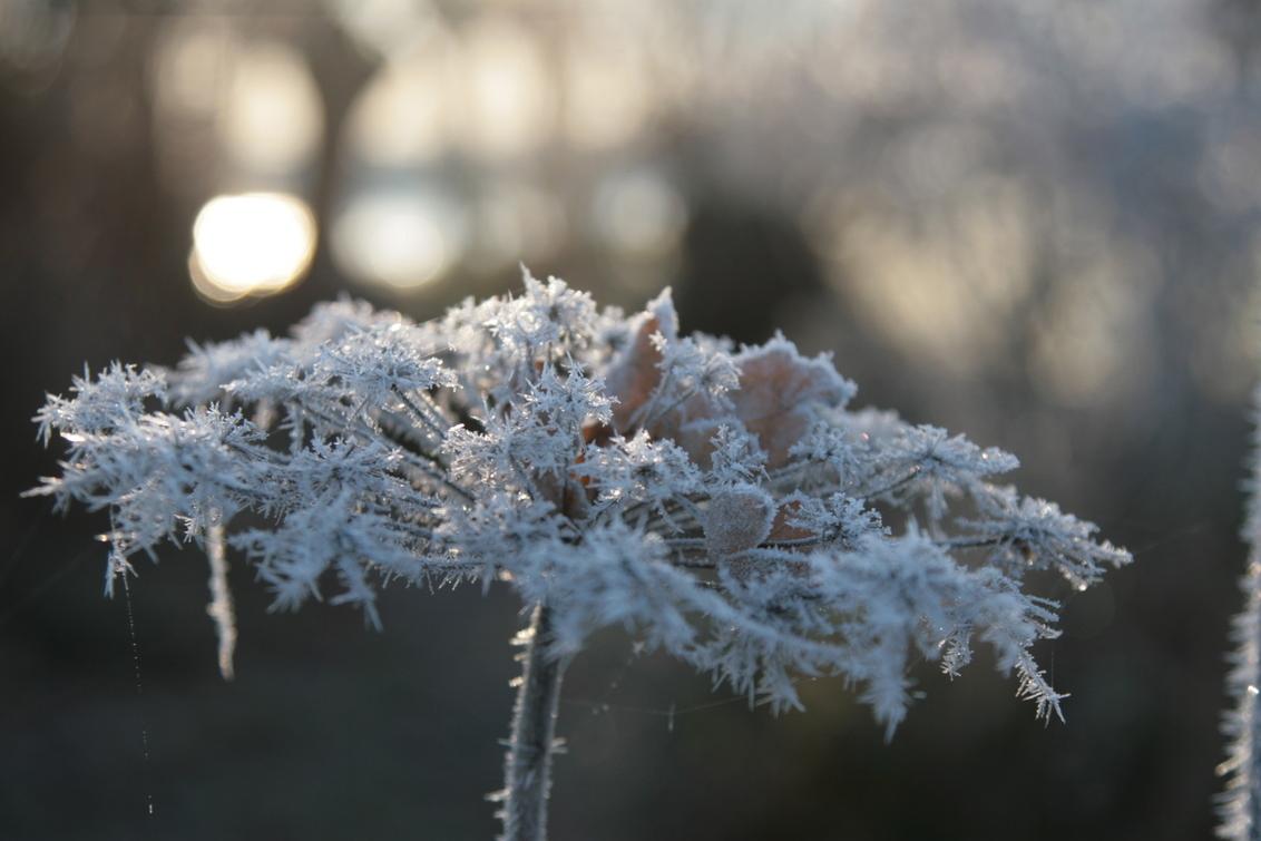 Koude Herfstochtend - Op de koudste herfstochtend van deze eeuw maakt de rijp een mooi tafereel voor de zon. - foto door b.neeleman op 29-11-2016 - deze foto bevat: rijp, winter, ijs, zonsopkomst, ijskristal