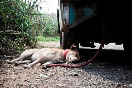 Wat een hitte - hond onder de auto [urlx=http://www.zoom.nl]ZOOM[/urlx] - foto door hanskl op 28-09-2012