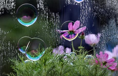 zeepbellen,op raam...