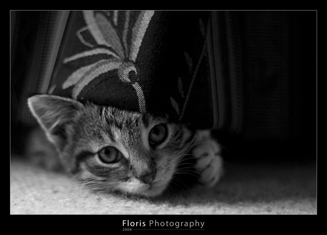 Curious - Amersfoort, 2008. - foto door Floris_Geest op 27-04-2011 - deze foto bevat: kitten, poes, huisdier, kat, perspectief, zwartwit, closeup, zwart-wit, close-up, huidier, Zwart/Wit