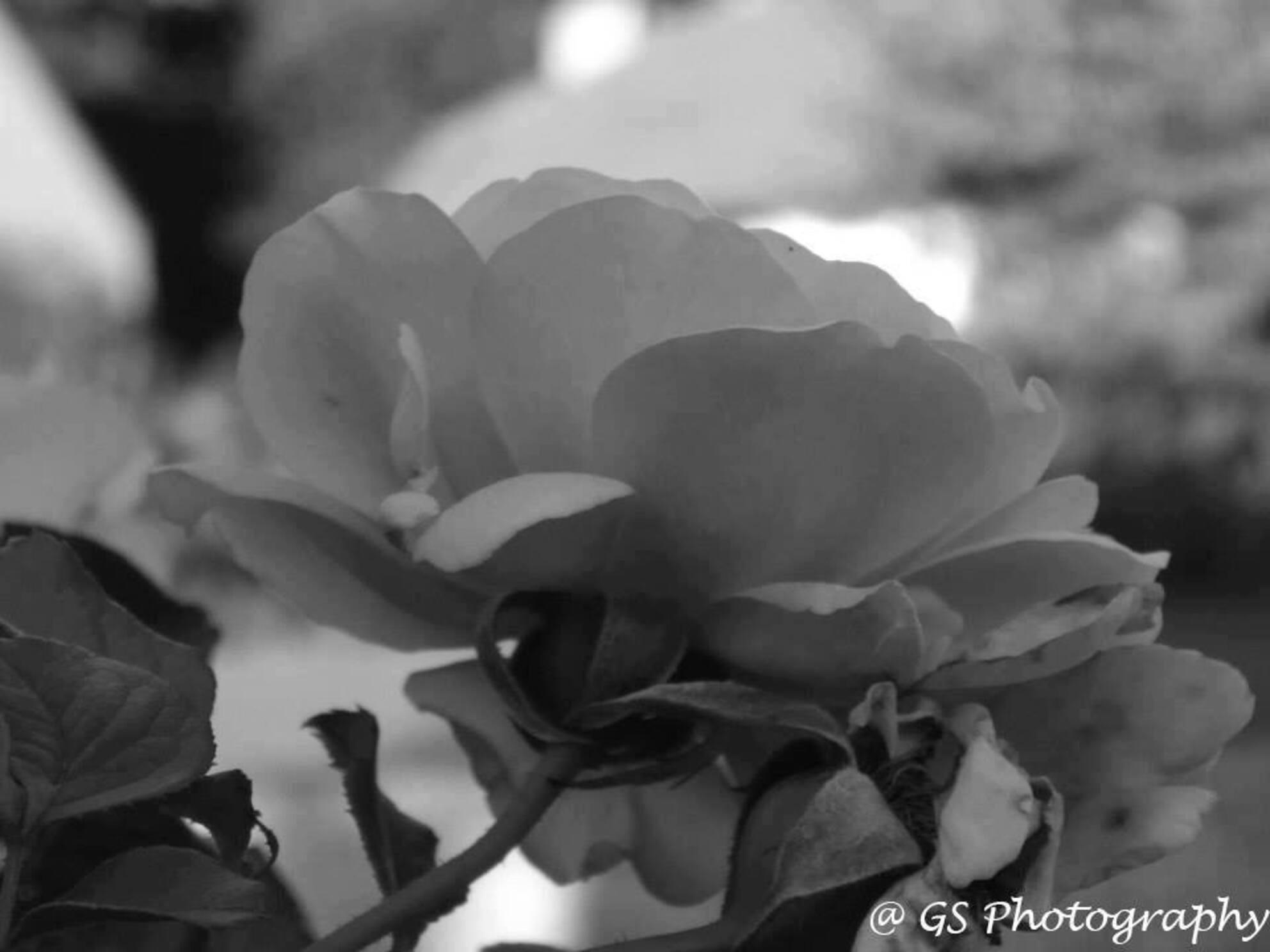 Bloem - - - foto door gwenvg1991 op 28-10-2014 - deze foto bevat: bloem, natuur, tuin, zomer - Deze foto mag gebruikt worden in een Zoom.nl publicatie
