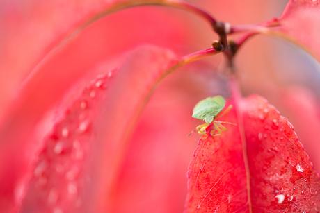 Groen op rood