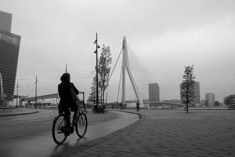 Bicycle Rotterdam