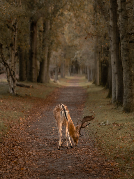 Oh deer, autumn is here.