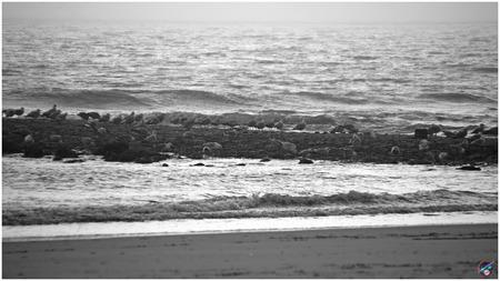 De kustwacht in de avondnevel ... - - - foto door willemdanker op 09-12-2018 - deze foto bevat: strand, zee, meeuwen, kustwacht, avondnevel, Den Helder