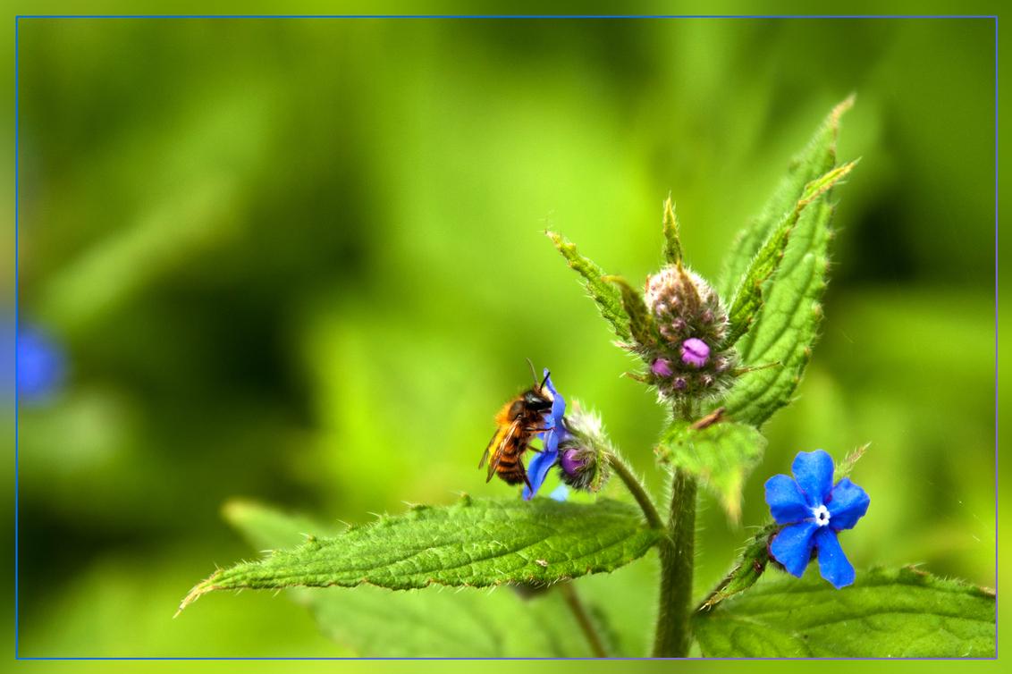 Bloemetje met bezoek - Uit de oogst van mijn bezoek aan het arboretum en plantentuin in Kalmthout, vorige zondag. - foto door kosmopol op 01-05-2012 - deze foto bevat: bloem, arboretum, plantentuin, kosmopol