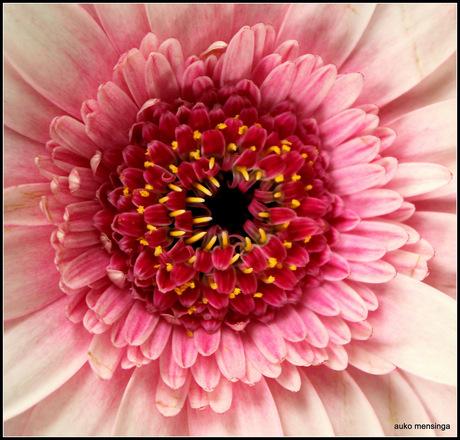 Hart van een bloem