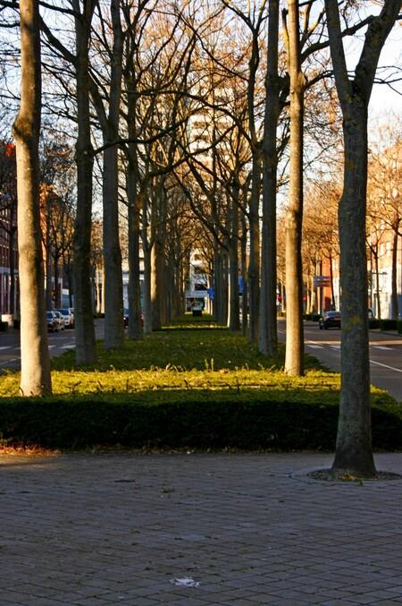 Bomenlaan - - - foto door Smeets op 06-03-2021 - deze foto bevat: boom