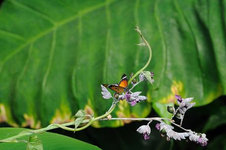 mini vlinder