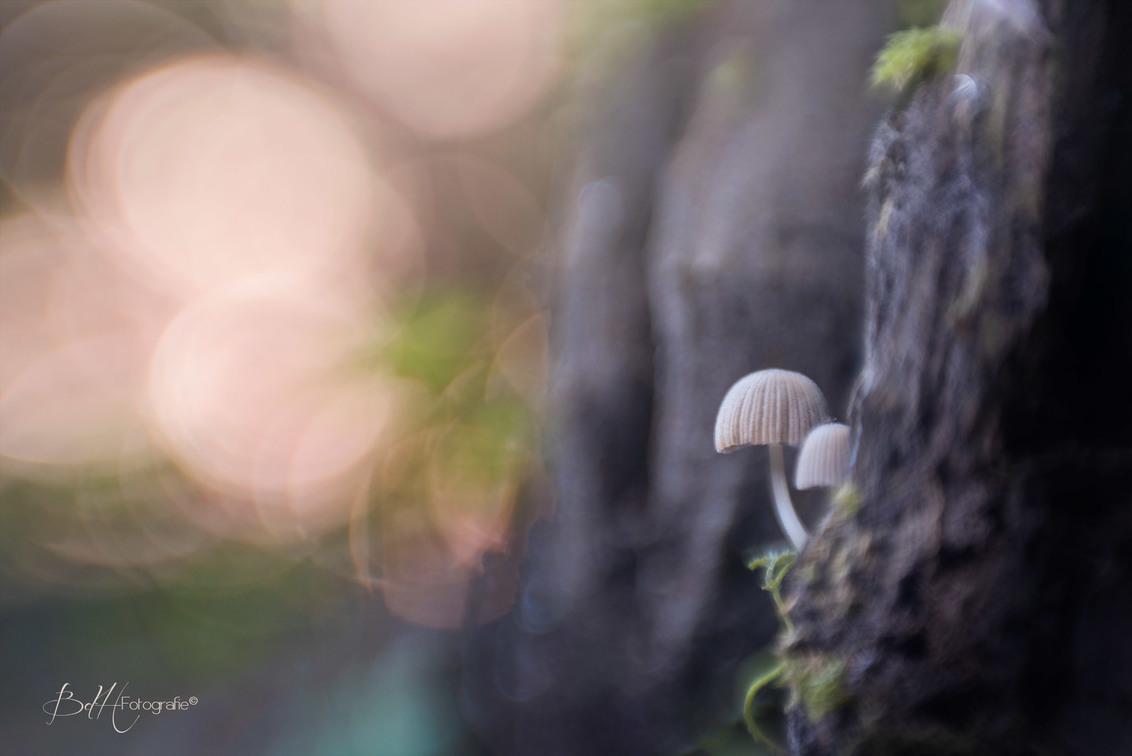 That moment when you take your child to show nature's light show - En dan loop je door het bos en waan je je in een heus sprookjes landschap. Ik herken hierin wel een beetje de film Avatar.  Dit paddenstoeltje naam - foto door BiancadH op 23-10-2018 - deze foto bevat: macro, natuur, bruin, licht, paddestoel, herfst, bos, dof, bokeh
