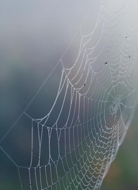 magisch spinnenweb