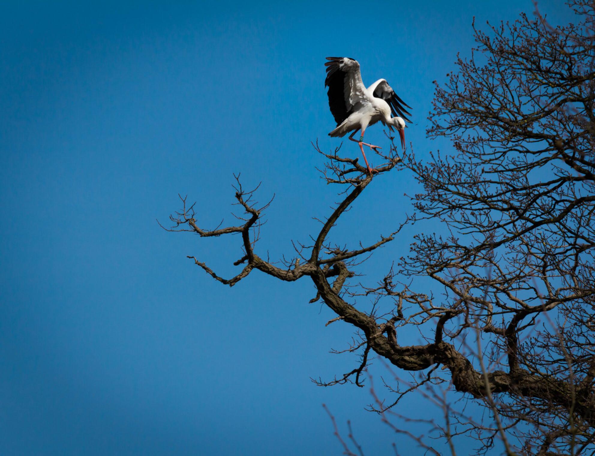 Trip naar Planckendael - De foto is genomen op een mooie lentedag.  Deze grote en opvallende vogel kon ik niet aan mijn lens voorbij laten gaan! - foto door laura29 op 12-04-2015 - deze foto bevat: dierentuin, natuur, dieren, vogel - Deze foto mag gebruikt worden in een Zoom.nl publicatie
