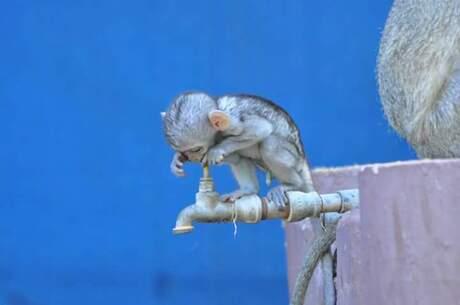 Het is zo heet in Afrika! even een slokje water :)