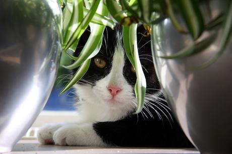 Jungle in de vensterbank.