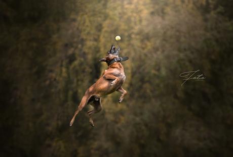 De sprong