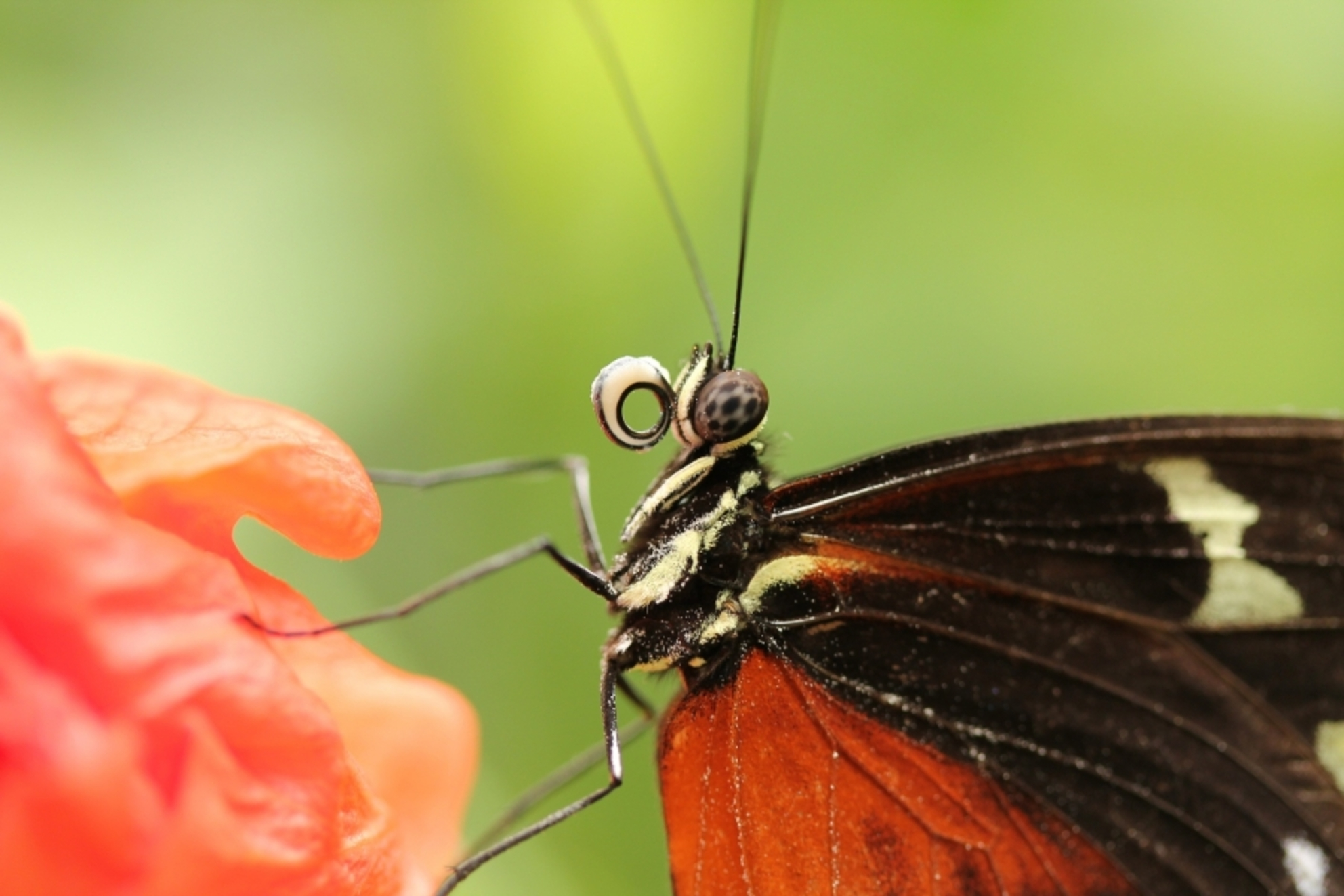 vlinder - Vlinder in de vlindertuin - foto door lisetteb op 29-08-2012 - deze foto bevat: vlinder - Deze foto mag gebruikt worden in een Zoom.nl publicatie