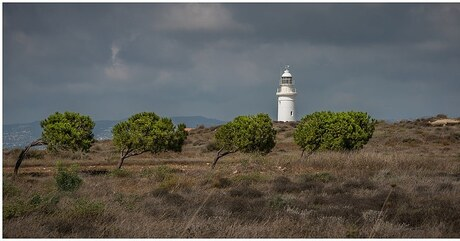 Four trees and a lighthouse