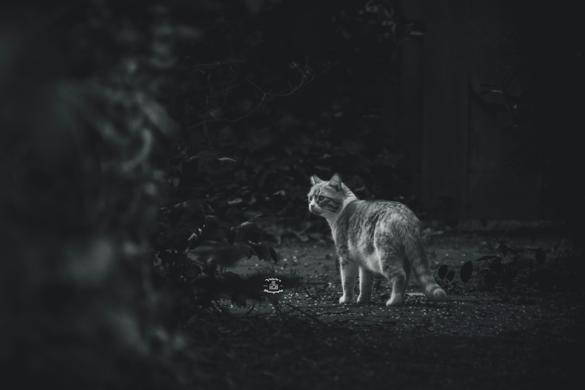 Cat in Black and white - De kat liep door een donker steegje toen er één straaltje licht precies goed viel - foto door Valeries-Photography op 23-05-2019 - deze foto bevat: natuur, black, poes, dieren, kat, kater, white, cat, roofdier, zoogdier, felis, huiskat, zwart wit, b&w