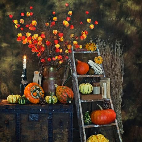 Autumn 2015 Stills