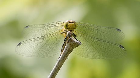 50 tinten groen libel