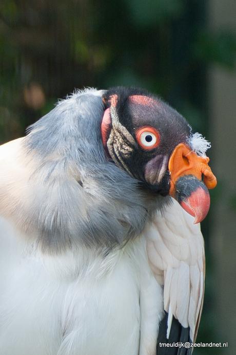 Geweldige vogel