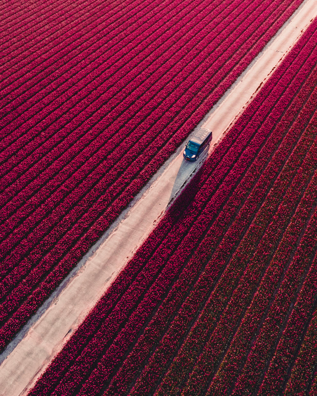 Into the fields - Levering vol met klompen is onderweg. - foto door mitevisuals op 20-02-2021 - deze foto bevat: bloem, bus, tulpen, lente, natuur, tulp, zonsondergang, landschap, auto, kleurrijk, weg, velden, veld, drone