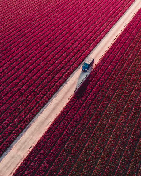 Into the fields