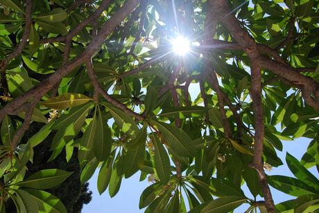 zon door bladeren